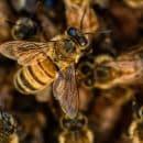 Top 3 des vertus du miel bio